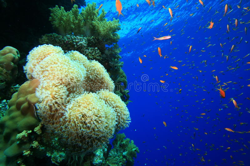 Download Healthy Tropical Coral Reef Stock Photo - Image: 11200144