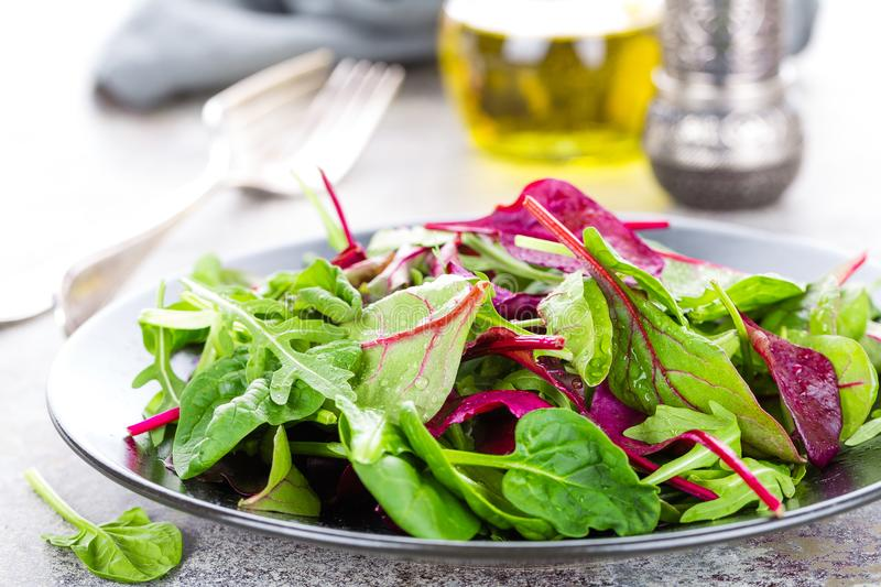 Healthy vegetarian dish, leafy salad with fresh chard, arugula, spinach and lettuce. Italian mix royalty free stock image