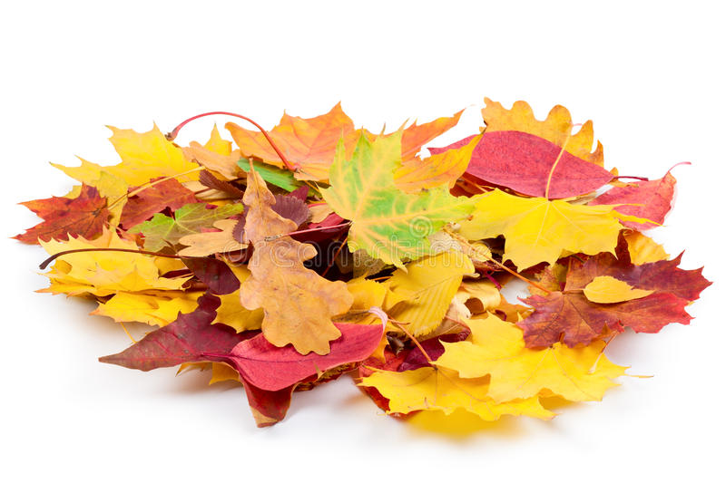 Download Heap of autumnal leaves stock photo. Image of nature - 24777520