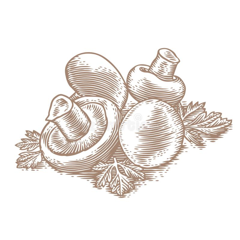 Heap of champignon with parsley. Heap of champignon with fresh green parsley stock illustration