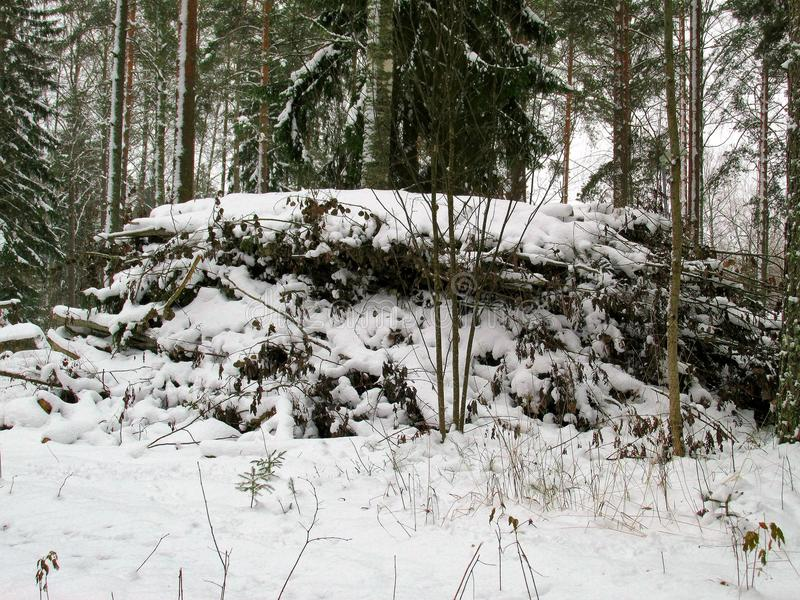 Heap of Cut Tree Branches in a Winter Forest royalty free stock photos