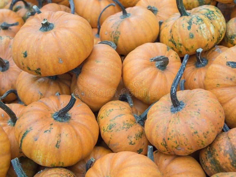 Heap de Mandarin Squash, Cucurbita maxima photo libre de droits