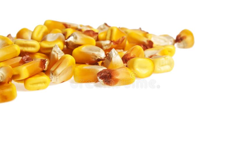 Heap of dried corn kernels, isolated on white background royalty free stock image