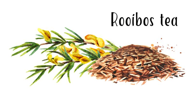 Heap of dry rooibos healthy organic tea with branch of the rooibos plant. Watercolor hand drawn illustration, isolated. On white background vector illustration