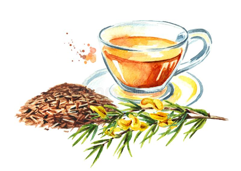 Heap of dry rooibos healthy organic tea and glass cup with branch of the rooibos plant. Watercolor hand drawn illustration. Isolated on white background stock illustration