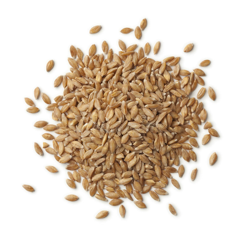 Heap of Einkorn wheat seeds royalty free stock image