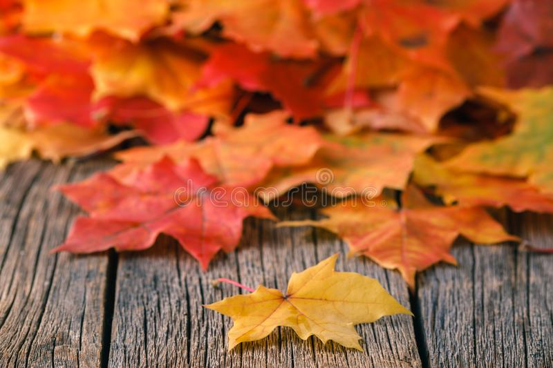 Heap of falll maple foliage on wooden table stock images