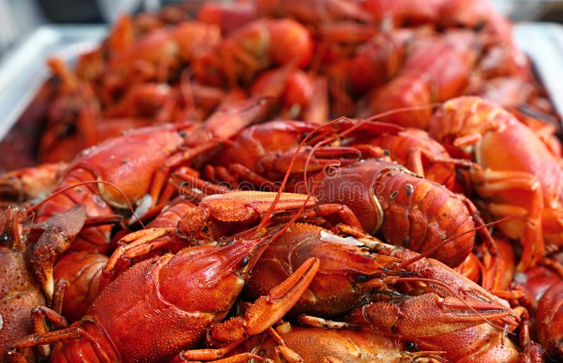 Heap of fresh cooked red crawfish close up. Heap of fresh cooked ready to eat red crawfish crayfish with claws in metal tray at retail display, close up, high royalty free stock photos