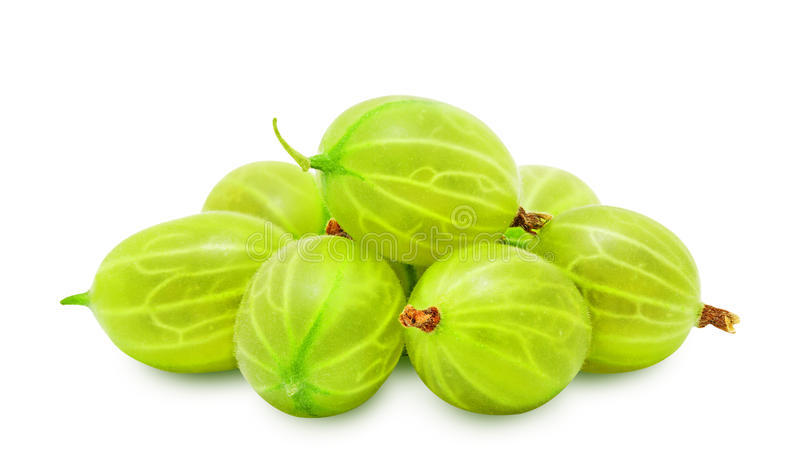 Heap of fresh gooseberries. Heap of fresh ripe gooseberry berries without leaves isolated on white background. Design element for product label, catalog print stock photos
