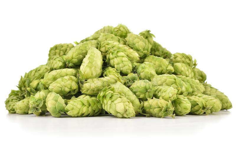 Heap of fresh green hops isolated on white background. stock photography