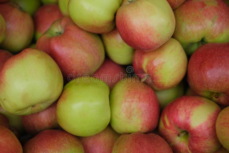 Heap of fresh raw apples. Juicy, brown, red, fruit, fall, table, galvanized, october, floating, tradition, pail, water, game, wood, bucket, harvest, metal stock photos