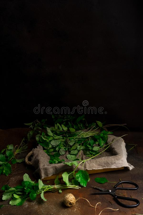 Heap of freshly cut mint on dark background. Low key image, vertical orientation, with copy space. Heap of freshly cut mint on dark background, front view. Low stock image