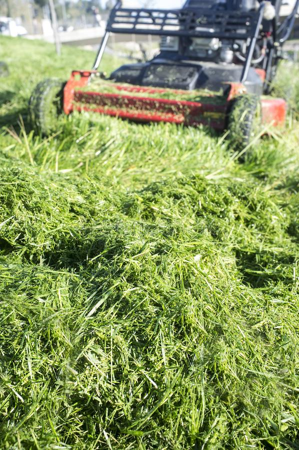 Heap of green grass new-mown with lawn mower. Focus on grass royalty free stock photo