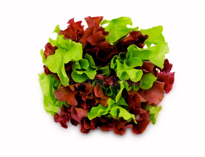 Heap of green and purple lettuce royalty free stock photos