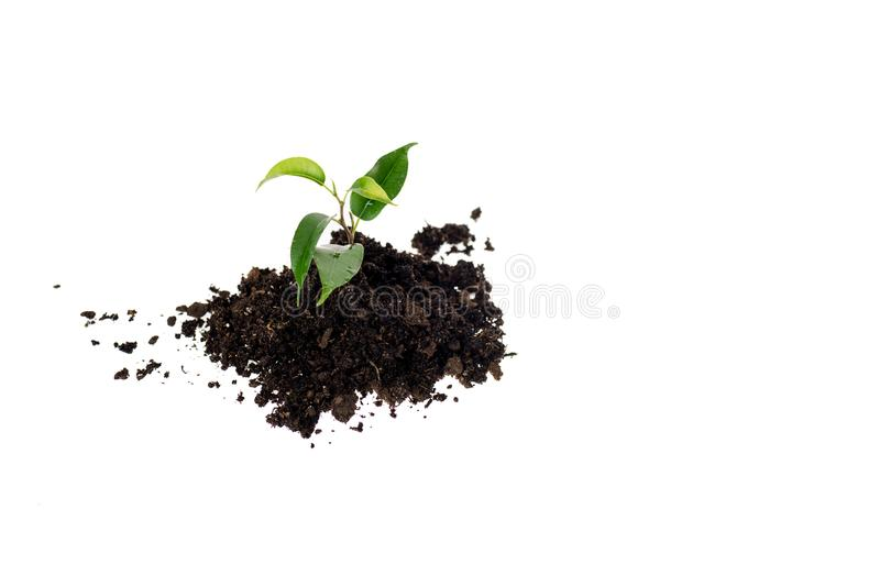 Heap of ground with small green plant. Isolated on white stock image
