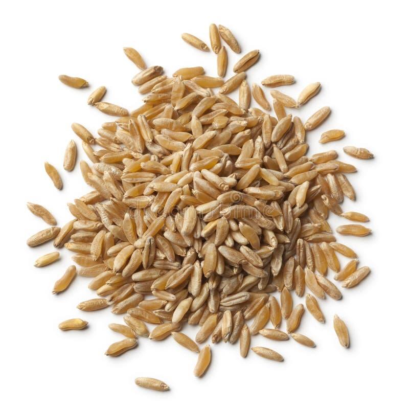 Heap of kamut kernels. On white background stock photo