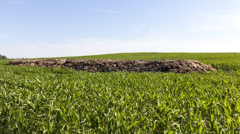 heap of manure stock photos
