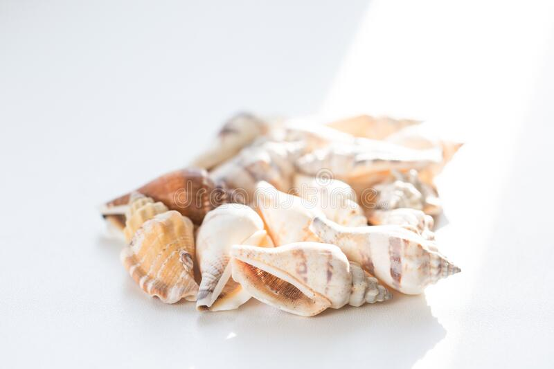 Heap of many beautiful sea shells on white background, side view. Summer travel concept.  stock photo