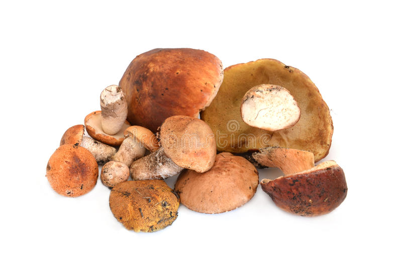 Download Heap Of Mushrooms Royalty Free Stock Photo - Image: 25757385