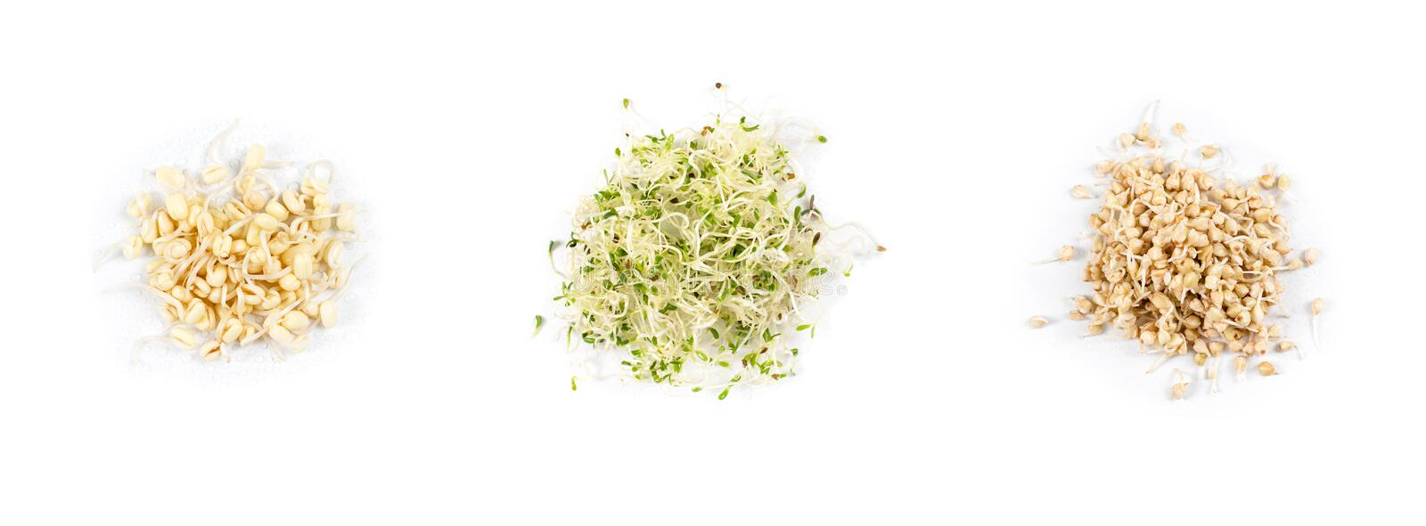 Heap of pea sprouts, sprouted alfalfa seeds and germinated buckwheat, micro greens on white background. Symbol of health royalty free stock photo