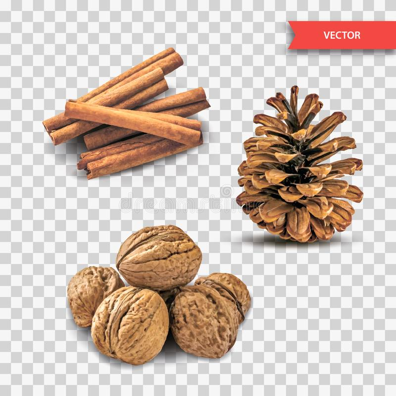 Heap or pile of dry cinnamon bark or chopsticks, walnuts and pine cone isolated on transparent background. Set of Decor Objects fo vector illustration