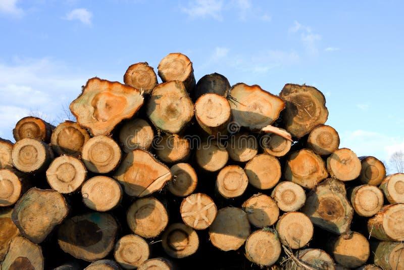 Heap of pine wood logs