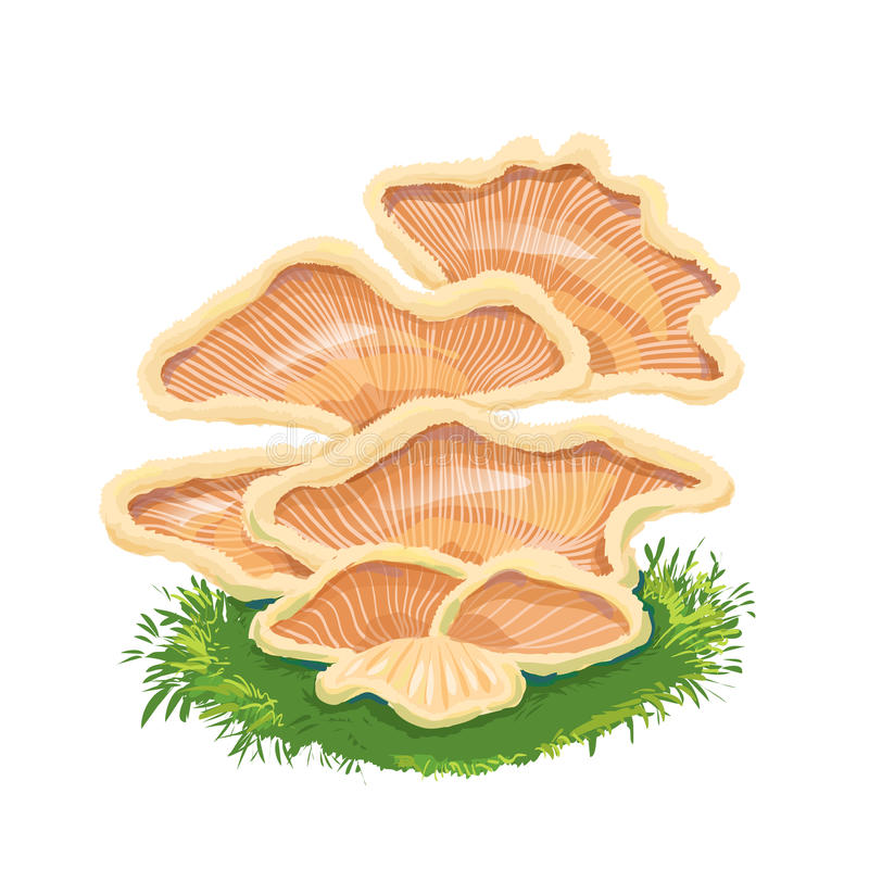 Free Heap Plate Of Mushrooms, Mushroom Family On Grass, An Icon With Stock Image - 69552991