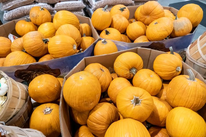 Heap of Pumpkins for sale royalty free stock images