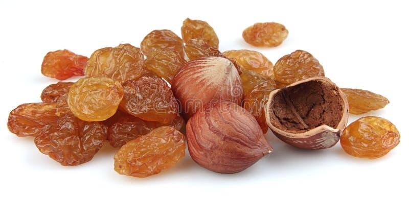 Heap of raisin and filbert stock photography