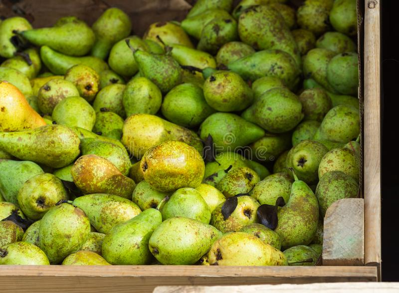Heap of Ripe Organic Green Yellow and Brown Conference Pears in Big Garden Wood Box at Farmers Market. Bright Vibrant Vivid Colors. Autumn Fall Harvest. Local stock photos