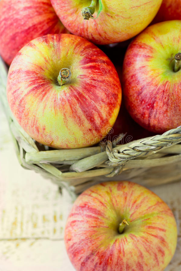 Heap of ripe organic red striped apples in a wicker basket and scattered. White plank wood garden or kitchen table. Healthy diet. Beauty. Summer autumn harvest royalty free stock photos