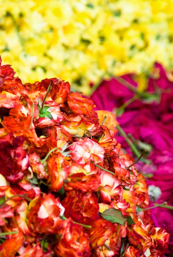 Download Heap Roses Royalty Free Stock Photos - Image: 12322758
