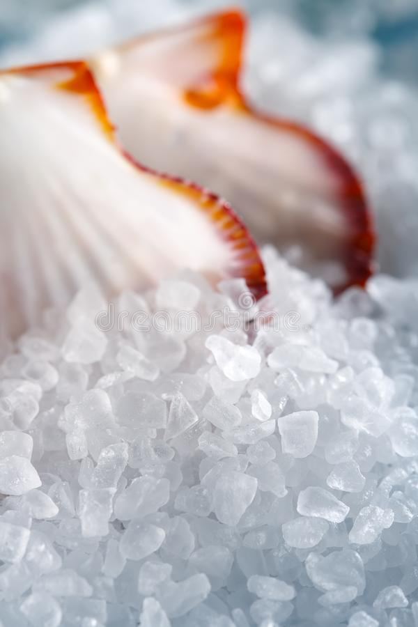 Heap of sea salt with a shellfish on background royalty free stock photos