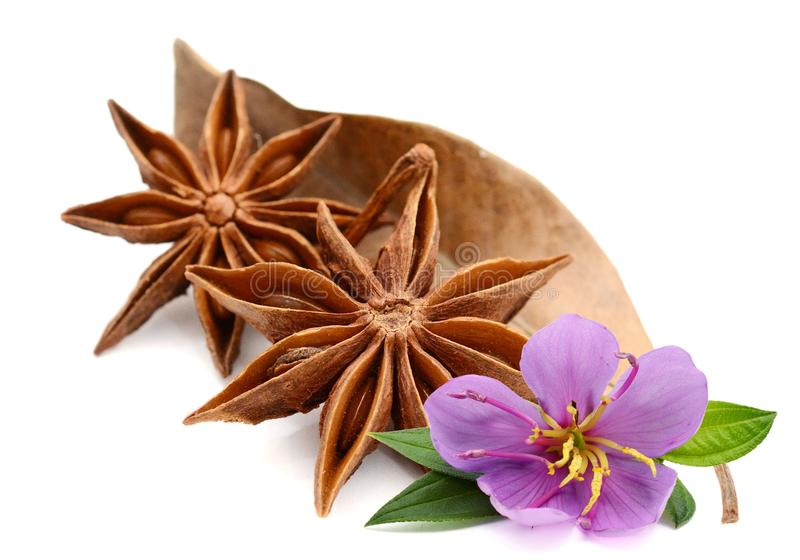 Heap of star anise on white. stock image