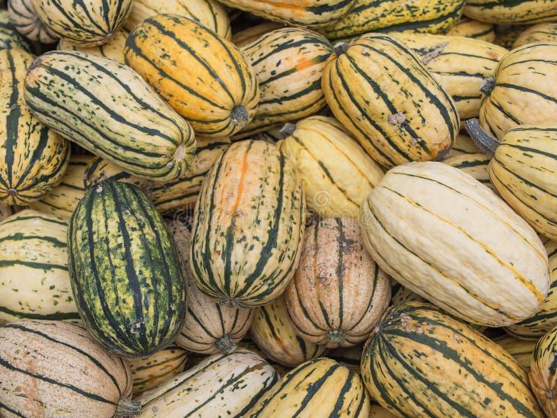 Heap of US American Delicata Squash, squash à l'arachide, poivron de Cucurbita images stock