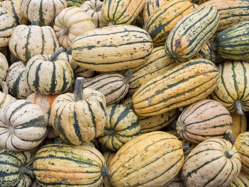 Heap of US American Delicata Squash, squash à l'arachide, poivron de Cucurbita images libres de droits