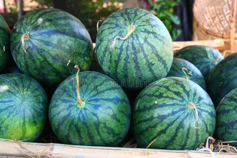 Download Heap of watermelons stock image. Image of dieting, gardening - 25414883