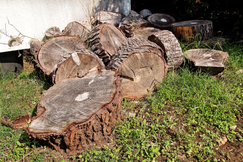 Heap of wood logs ready for winter. Cut tree trunks on grass. Stack of chopped firewood. A pile of woods in the house storage. Raw barked wood logs in a stock images