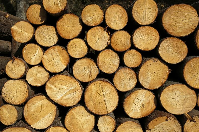 Heap of wooden logs. In the forest royalty free stock photography