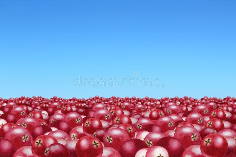 Heaps of cranberries to the horizon and blue sky royalty free illustration