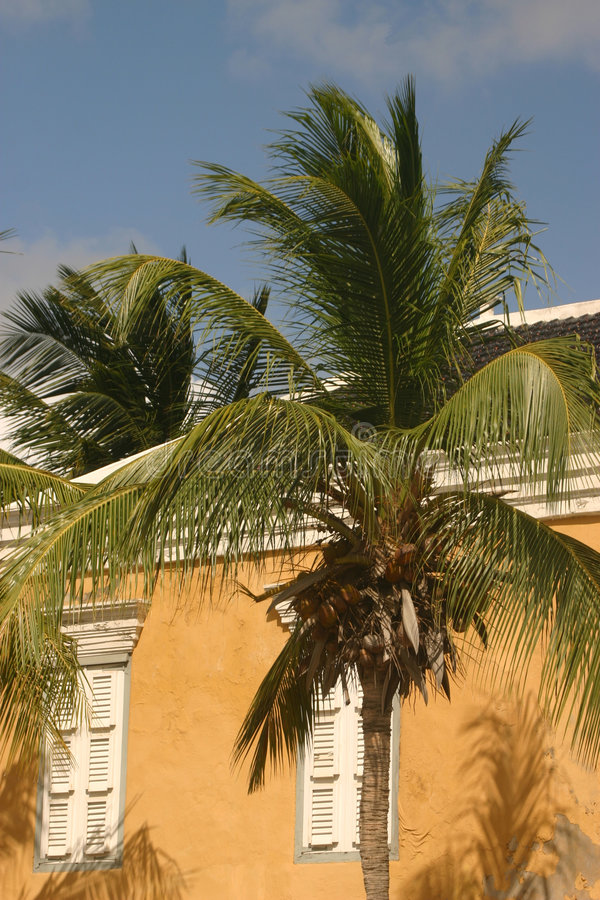 Free Hear The Palmtrees Stock Image - 556301