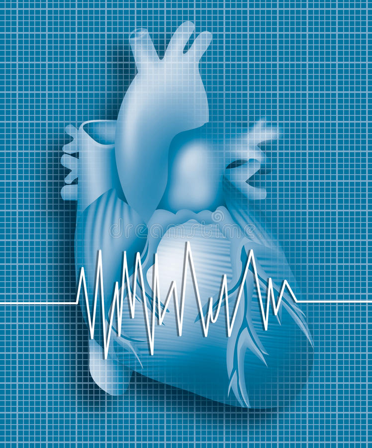 Heart. Illustration of human heart with ecg ekg background vector illustration