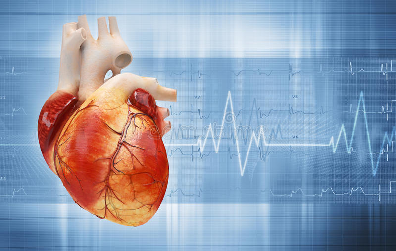 Download Heart stock illustration. Image of running, heartbeat - 28761464