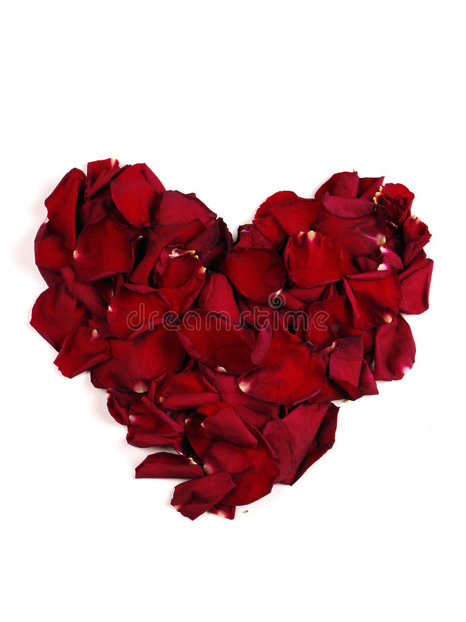 Download Heart stock image. Image of heart, beautiful, floral, rose - 4075147