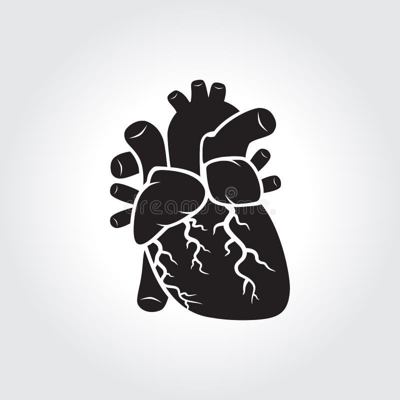Heart anatomy royalty free illustration