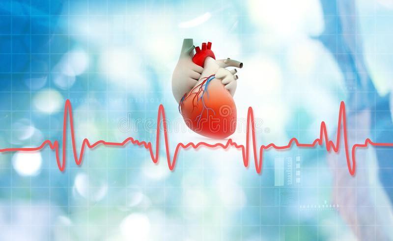 Heart anatomy with normal heartbeat rhythm vector illustration