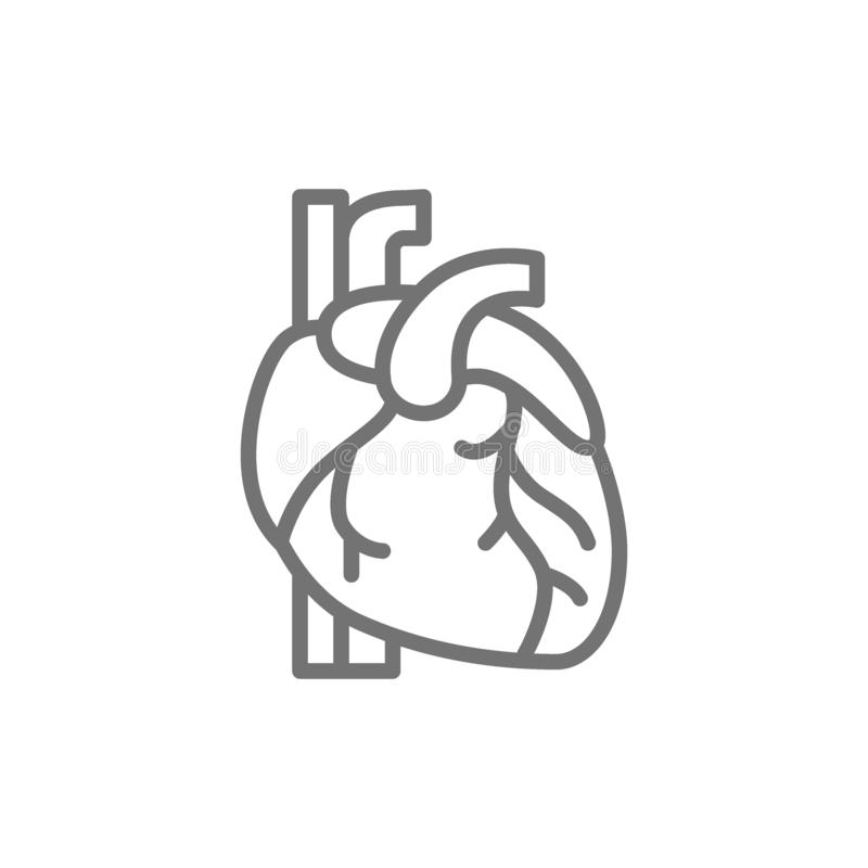 Heart, artery, vein, human organ line icon. stock illustration