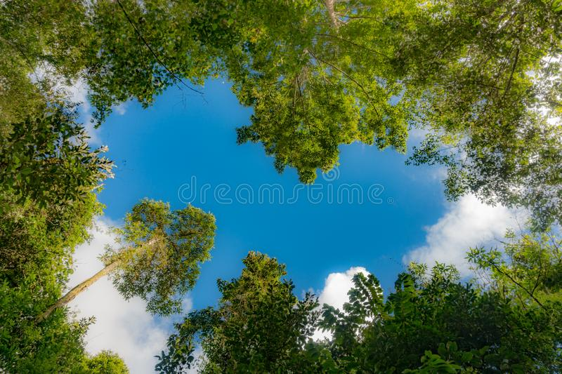 Heart-shaped sky in the forest. Heart blue sku forest tree Color green cloud bosque heart-shaped sky royalty free stock photography