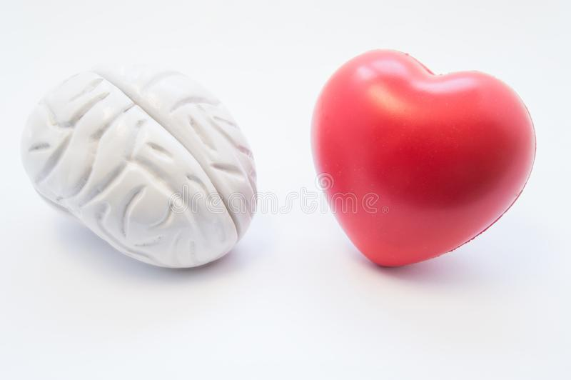 Heart and brain figures lie next to each other on white background. Visualization of connection between brain and heart, choice in royalty free stock image