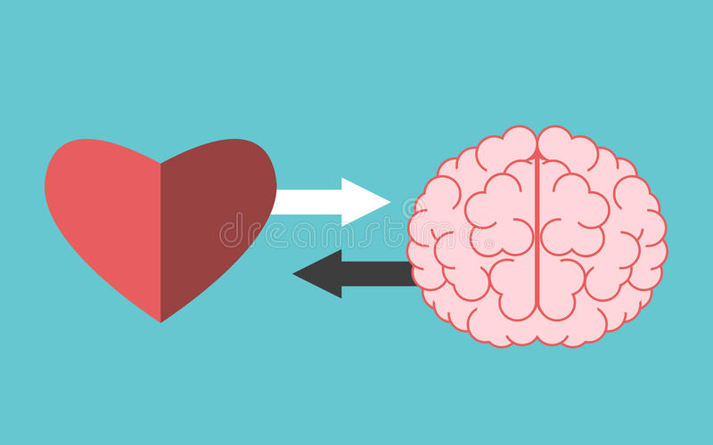 Heart and brain interaction. Heart and brain with arrows on turquoise blue. Interaction, connection, creativity, logic, intelligence and emotion concept. Flat royalty free illustration